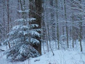 gentle snow