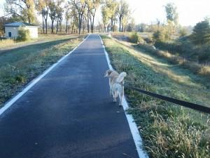 dog-199958_1280